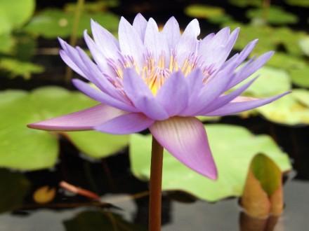 Yoga et méditation, quel lien entre ces pratiques ?